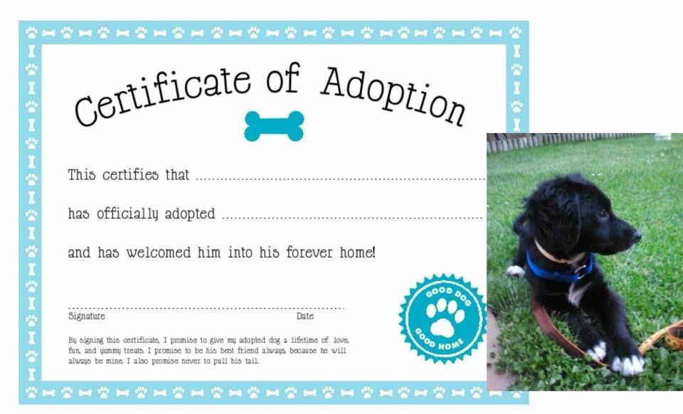 Adoptar animais online dating