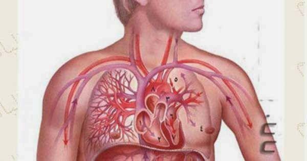 جسم الإنسان حقائق مذهلة تثير الإندهاش Tattoos