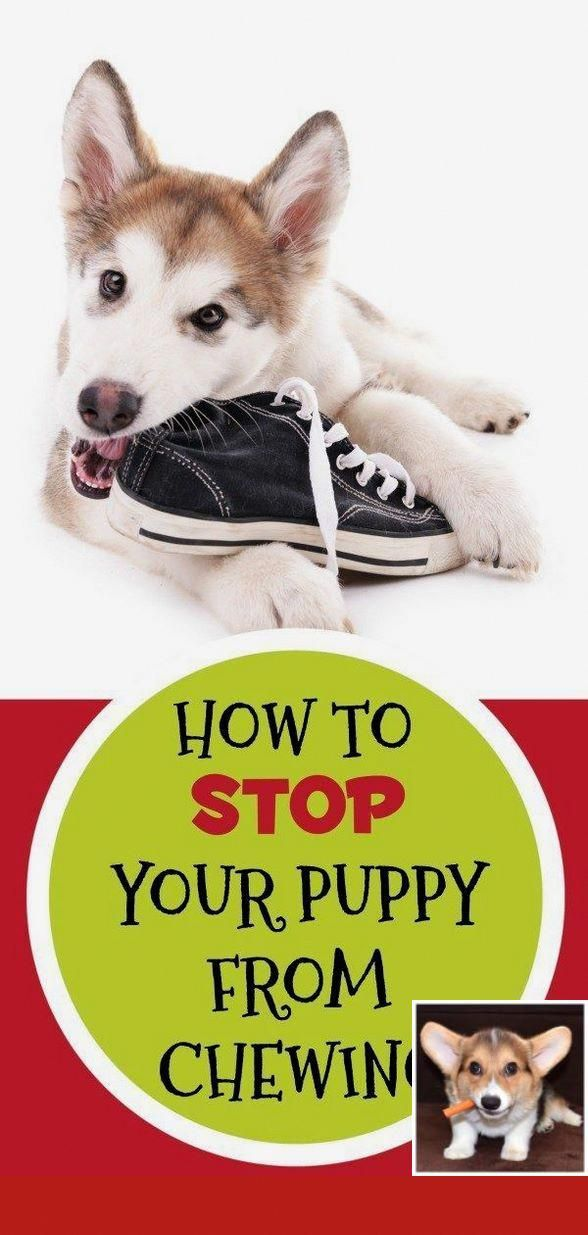 Dog Training Tips Food Aggression Dog Training Tips Pinterest