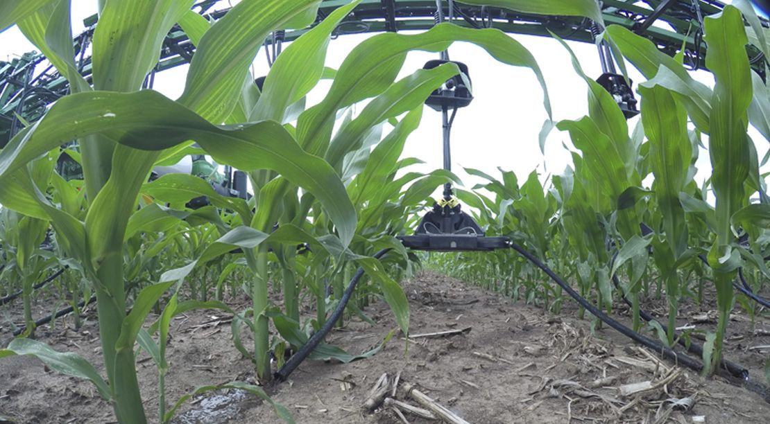 Late Season Nitrogen Application Corn