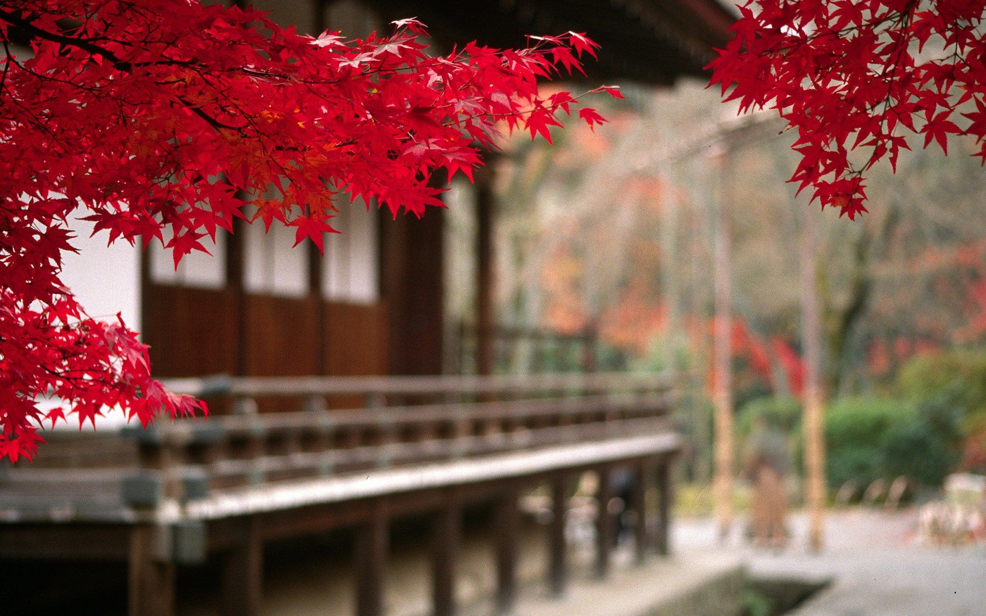 Fall Scenery Hd Wallpaper Find Out Japan Autumn Wallpaper On Http Hdpicorner Com