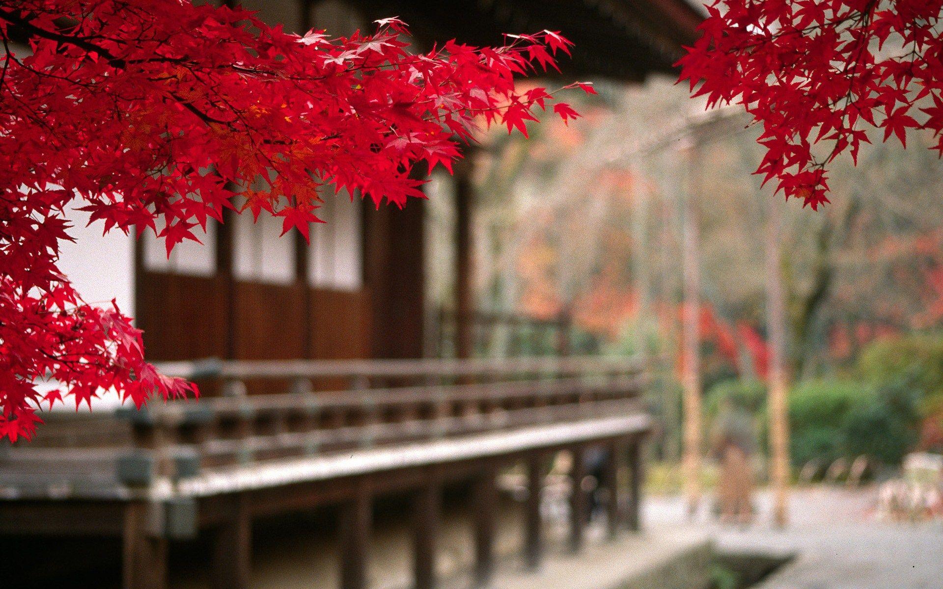 Hd wallpaper japan - Find Out Japan Autumn Wallpaper On Http Hdpicorner Com Japan