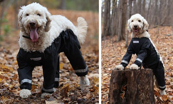 Riddle Finally Solved: Dogs Should Wear Pants Like This! - 9GAG
