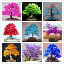 20pcs/bag japanese maple seeds fire maple bonsai flower seeds tree seeds potted plant 98%germination 9 colors for home garden(China (Mainland))