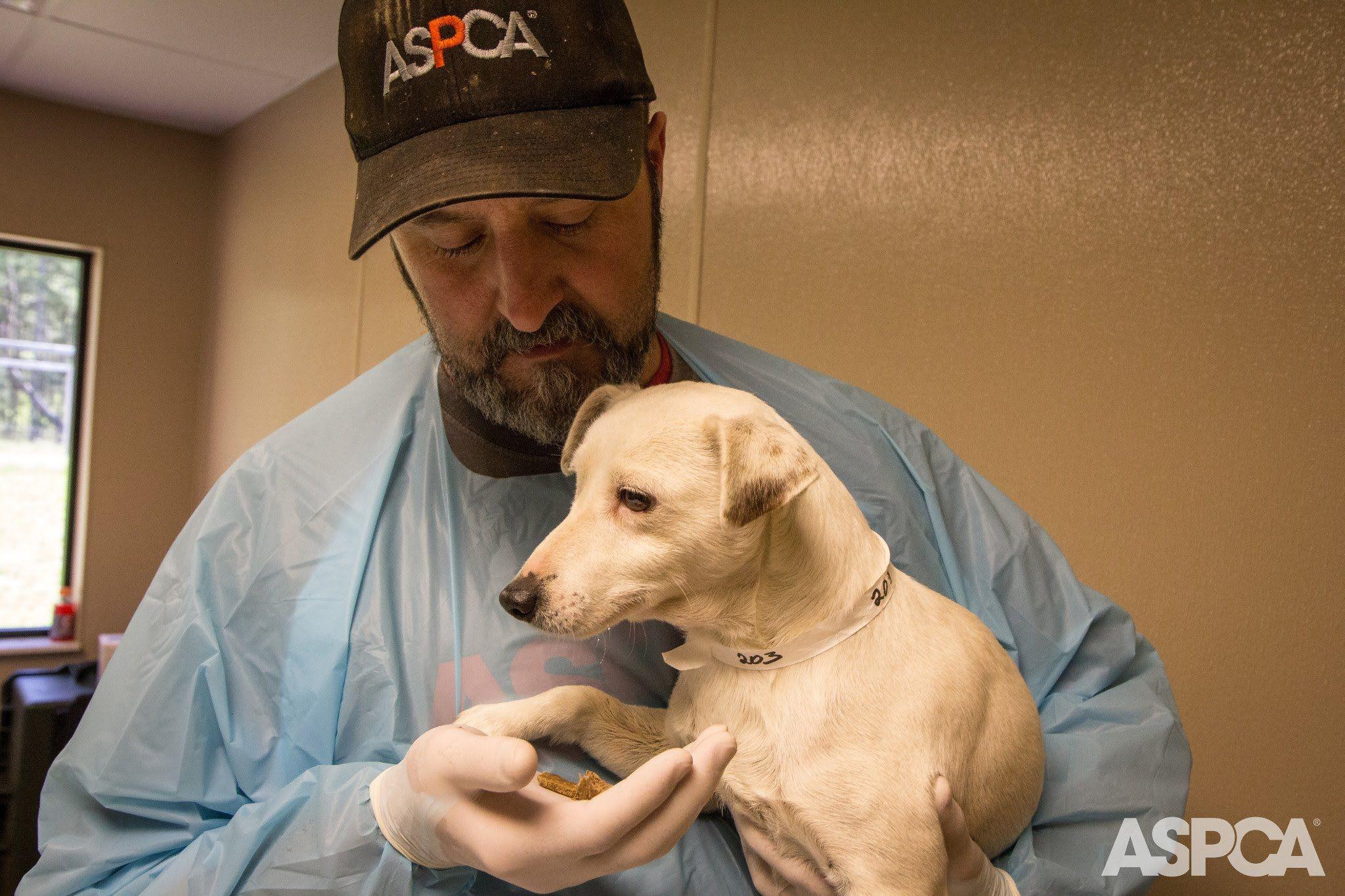 Puppy mill rescue charlotte nc
