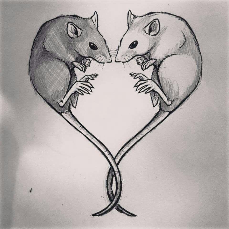 трогательным фото рисунки животных крысы оптимальной планировки кухни