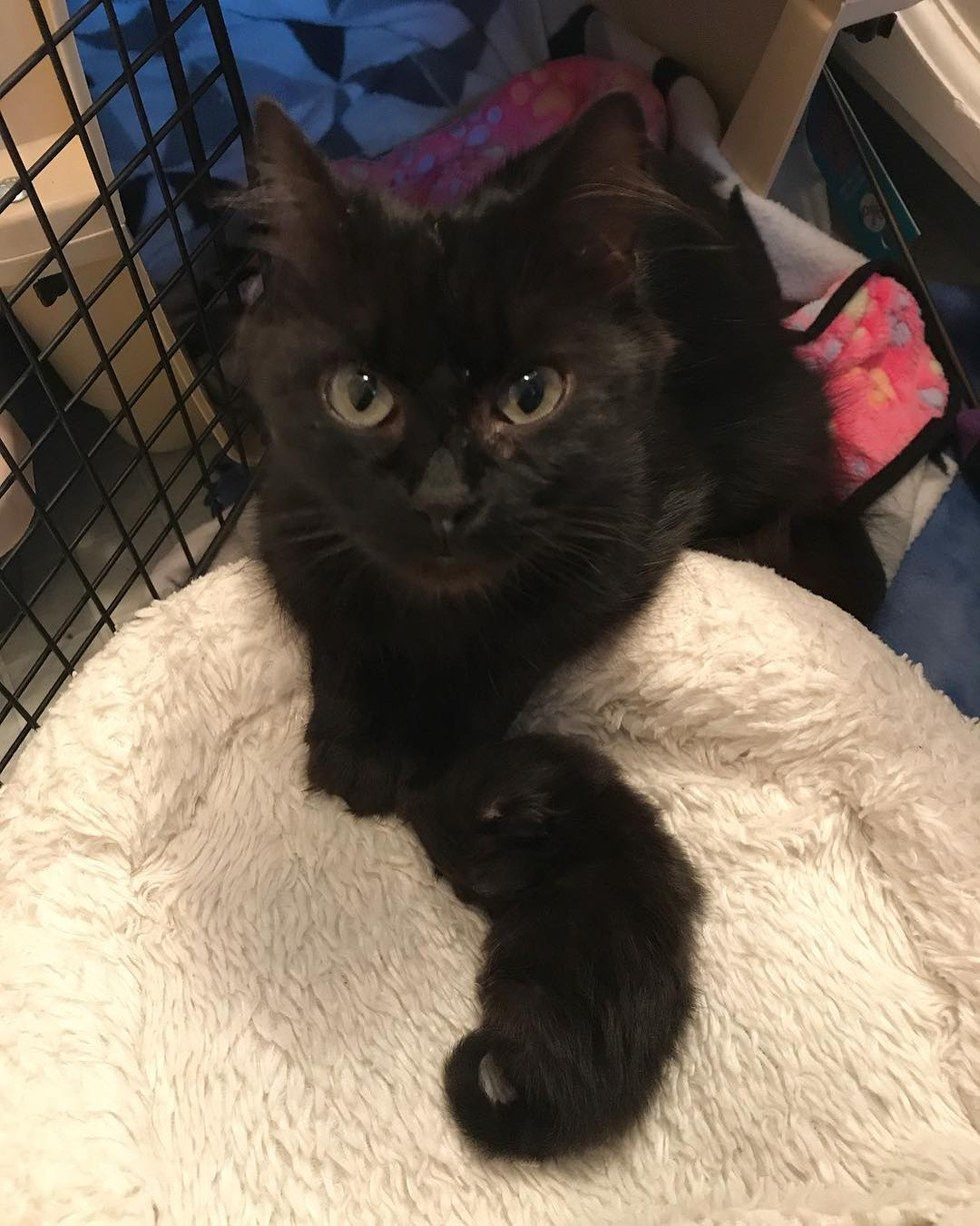 A Little Singleton Was Rescued Along With Her Cat Mama When She Was Five Days Old To The Rescuers Surprise The Kitten Was Only Th Cat Adoption Mama Cat Cats