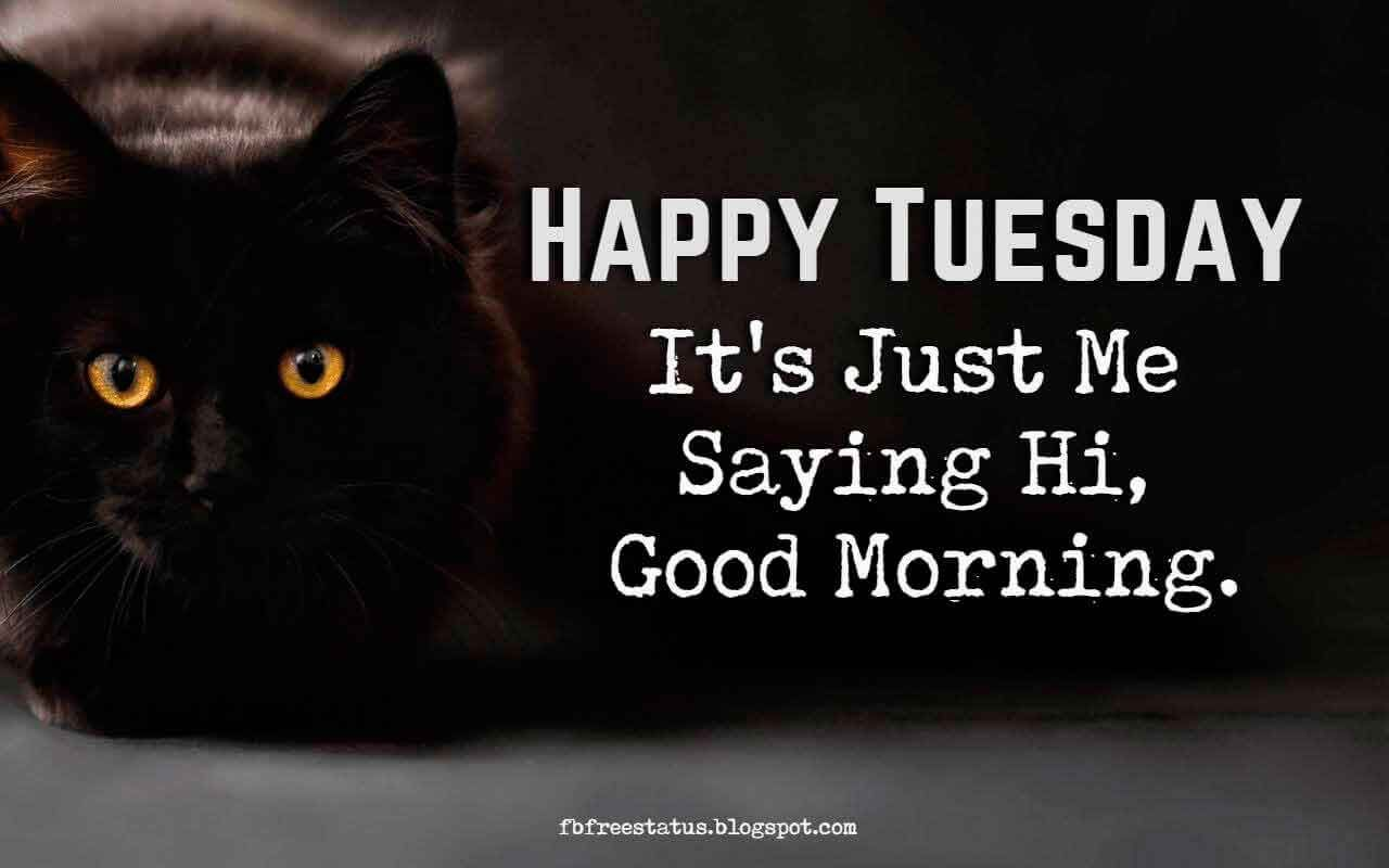 Happy Funny Tuesday Quotes With Images Pictures Happy Tuesday Quotes Tuesday Quotes Funny Tuesday Quotes
