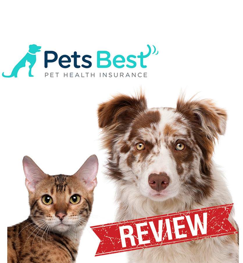 5 Steps To Finding The Best Pet Insurance With Images Pet