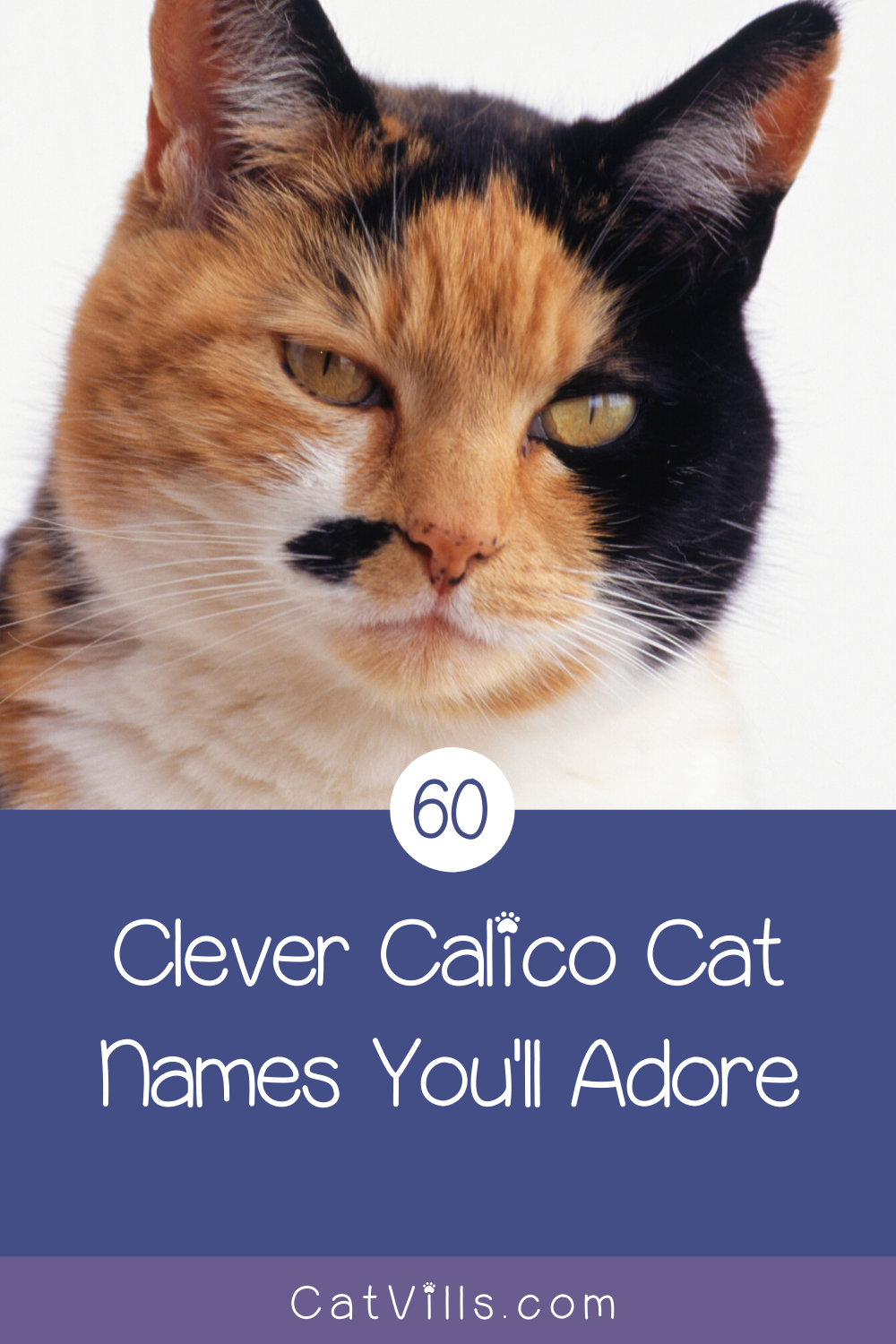 60 Clever Calico Cat Names You Ll Adore Catvills In 2020 Calico Cat Names Cat Names Calico Cat