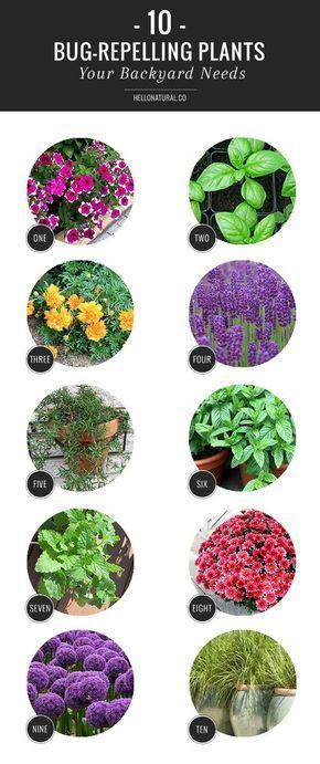 10 Bug Repelling Plants Your Backyard Needs