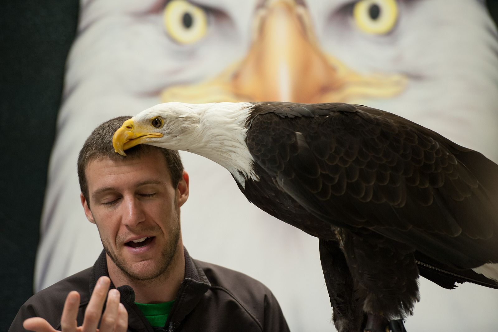 Eagle wiping his postlunch face on a convenient object