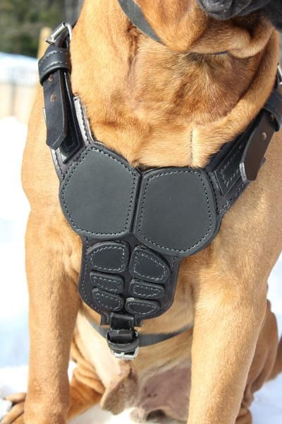 Body Armor Harness Oli Collars Leather Dog Collar Custom