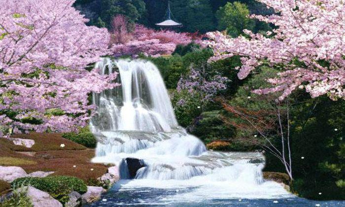 SAKURA  cherry blossom festival in Japan