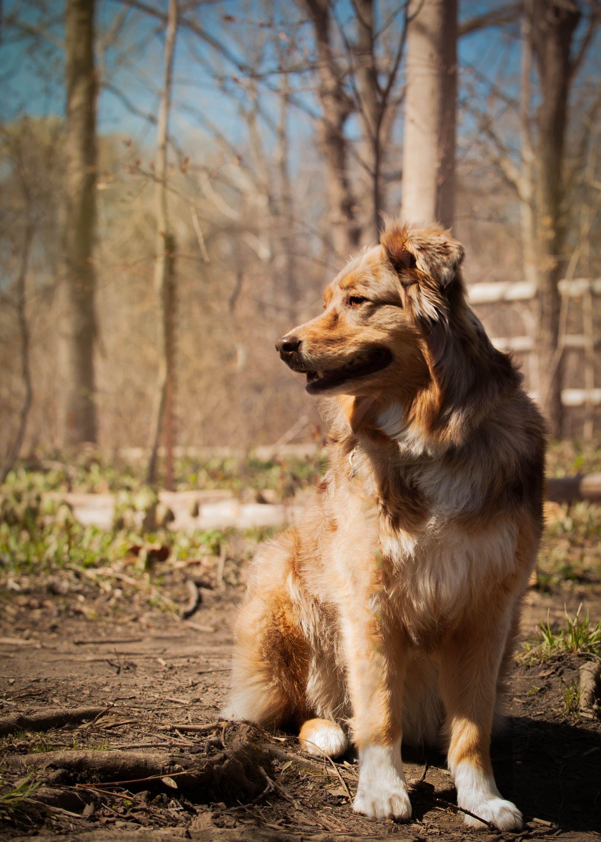 London Ontario Dog Walker