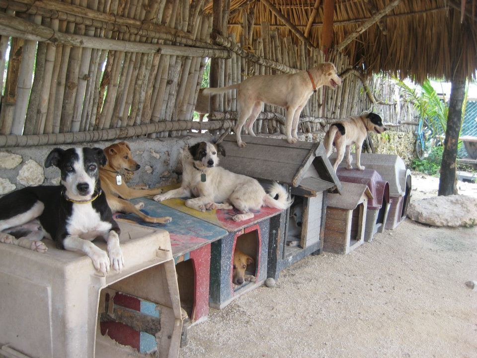 Cancun, Mexico Dogs in large groups staying cool in the