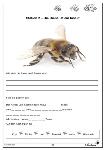 Photo of Die Biene | Lernbiene Verlag