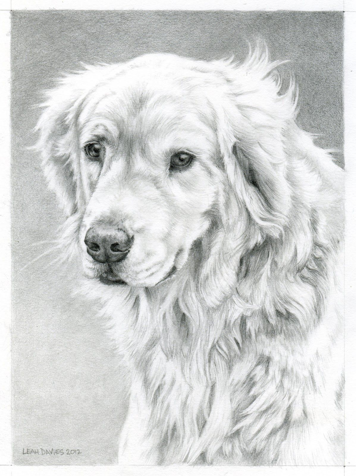 Golden Retriever Coloring Page Leah Davies Art Work In