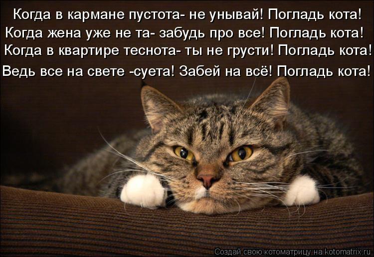 станет картинки в стихах просыпайся котик была