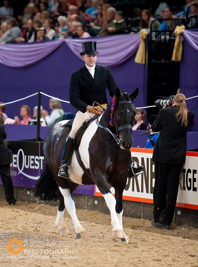Paul Isaac and Rockstar - The Search For a Star Championship - HOYS 2011