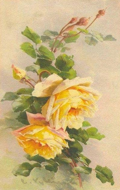 шебби розы
