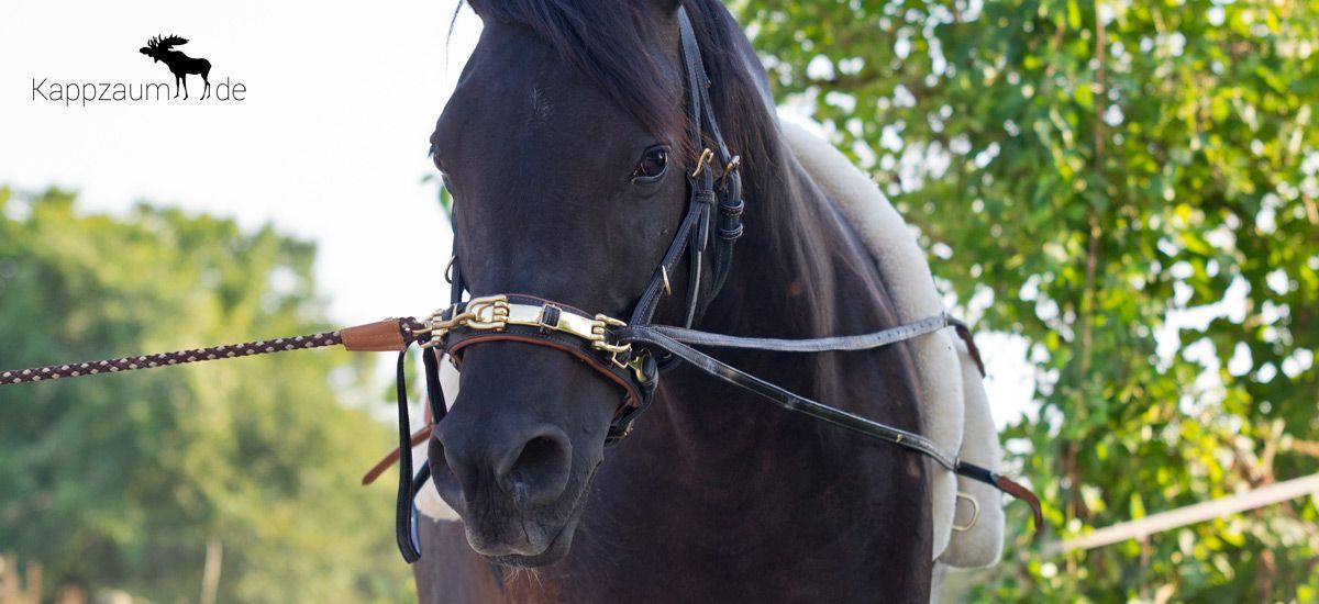 pferd rückenmuskulatur aufbauen