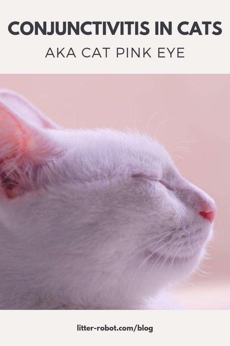 Conjunctivitis In Cats Aka Cat Pink Eye Litter Robot Blog Conjunctivitis Cats Pink Eyes