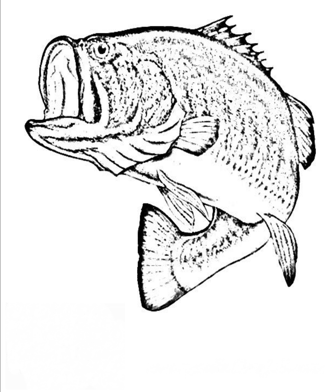 Bass Fish Coloring Pages To Print Fish Coloring Page Fish Sketch Fish Drawings