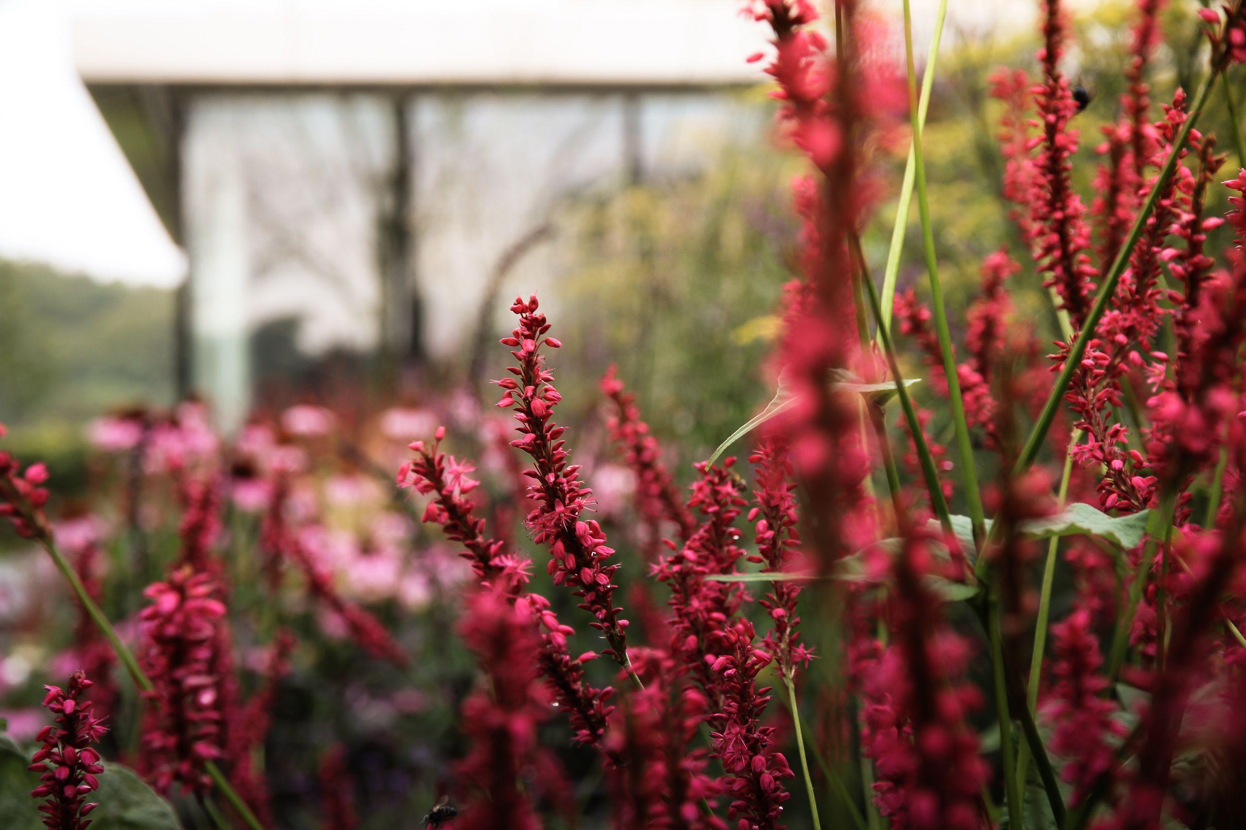 Weelderige tuin 4