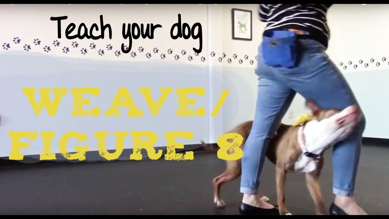 Train Your Dog To Limp With His Hind Legs Dog Trick Training