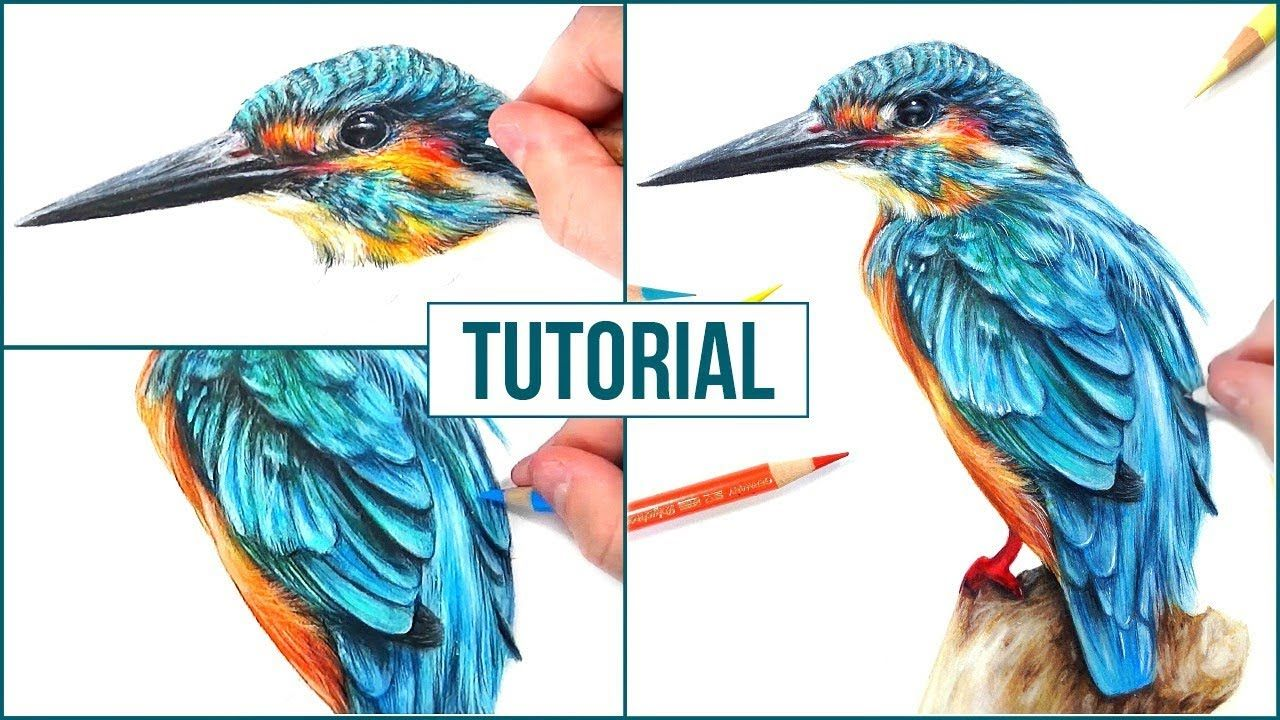 How to Draw a Realistic Bird using Coloured Pencils   Step ...
