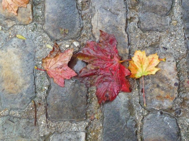 Feuilles mortes sur pavés parisiens  http://www.pariscotejardin.fr/2012/10/feuilles-mortes-sur-paves-parisiens/