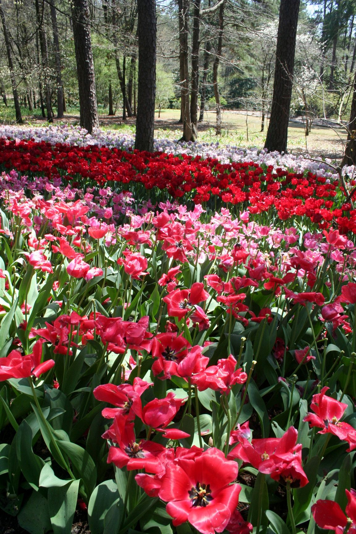 Springtime At Garvan Woodland Gardens Hot Springs Arkansas