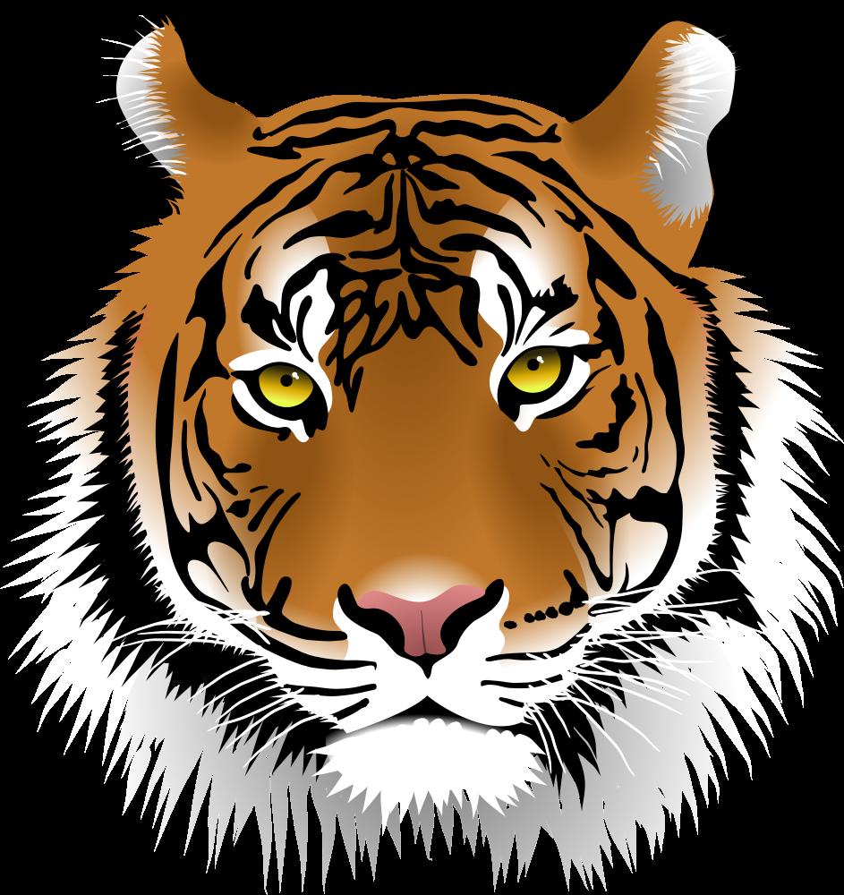 Dragon Hd Wallpaper Pdf Download Google Search Cartoon Tiger Tiger Face Tiger Illustration