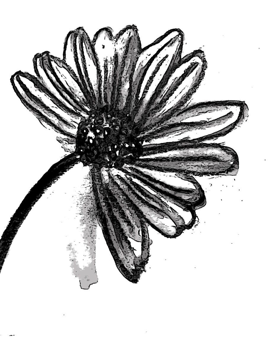 Ink Drawing Of Daisy Flower 93 Pinterest Draw Drawing
