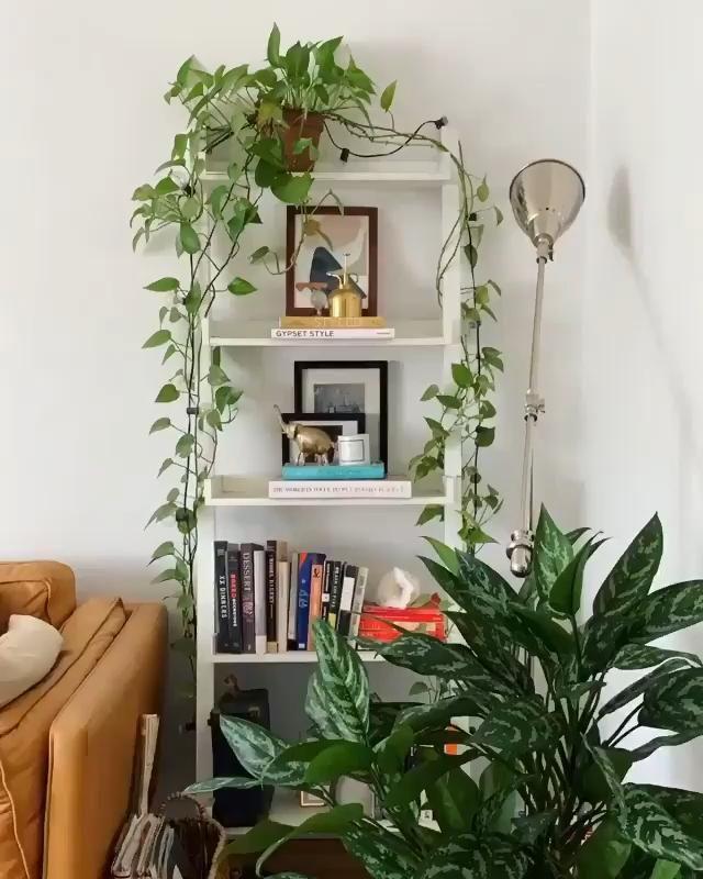 Plant-filled shelf decoration