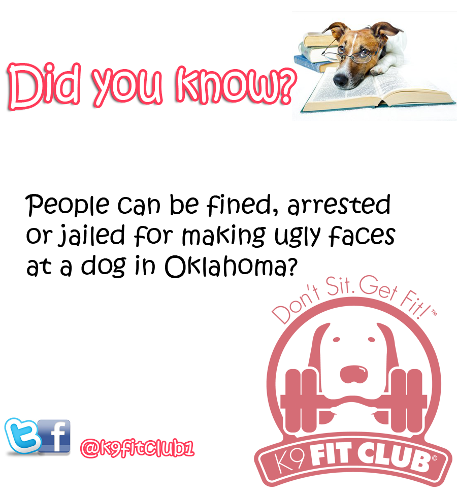 Weird law in Oklahoma for Dogs  | K9 Fit Club Daily Dose of DOGS