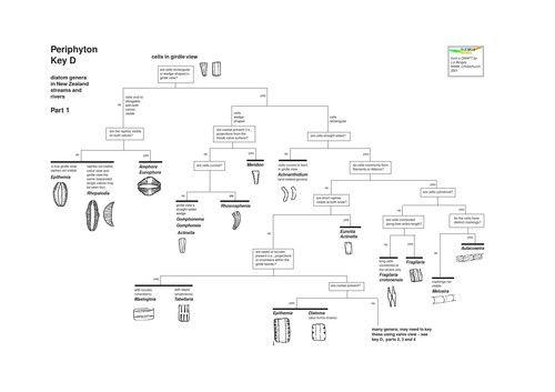 Diatom Genus Key Diatom Key Marine Biology