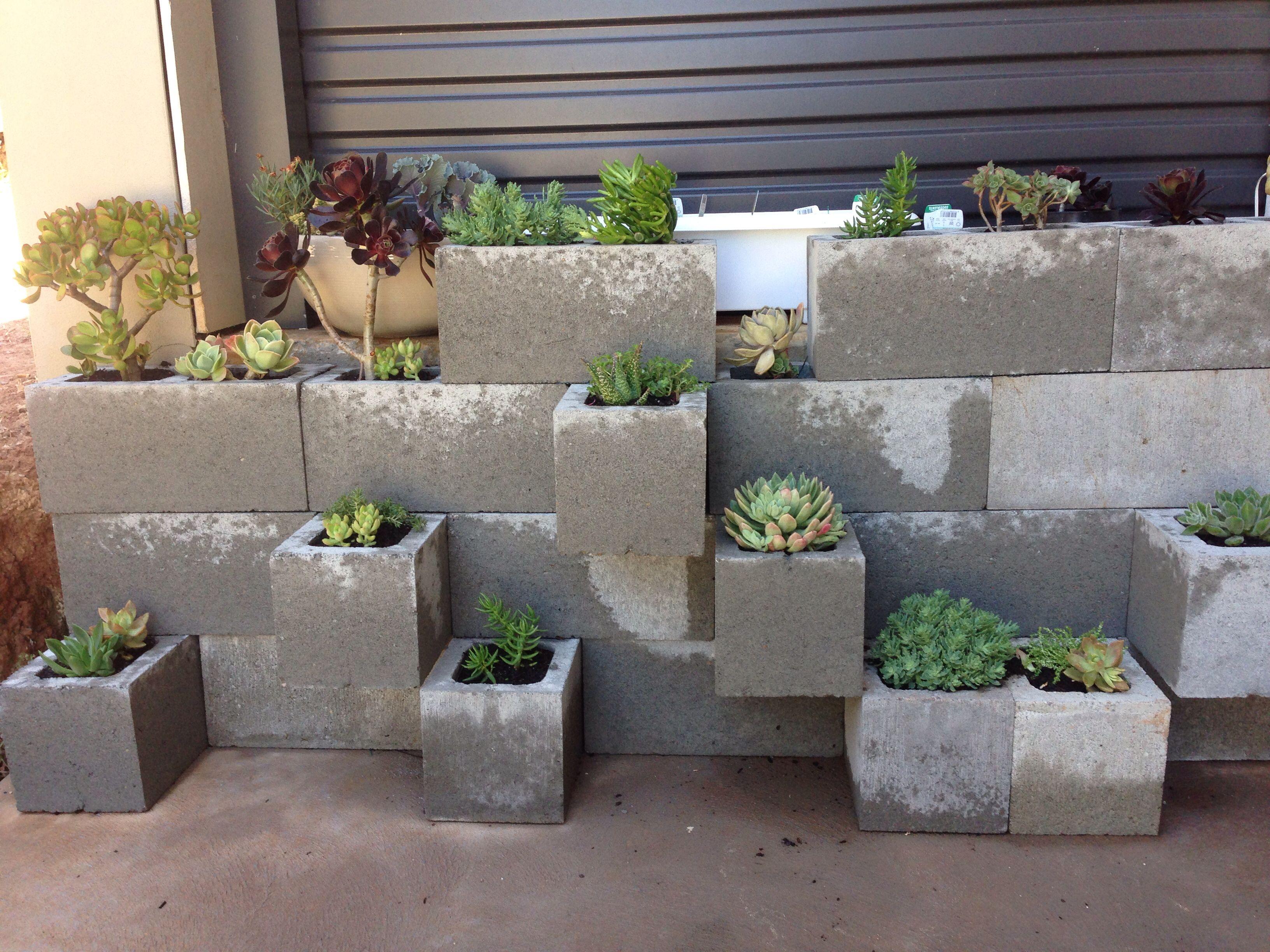 Besser Block Succulent Garden Back Yard Cinder Block