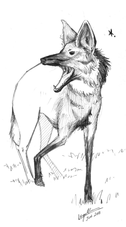 Lobo Guara Com Imagens Lobo Guara Animais Desenhos Faceis