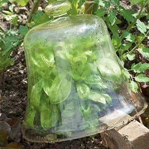 Comment cultiver le basilic en jardinière en 2020 ...