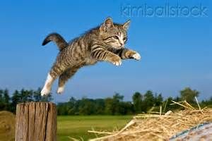cat jumping for joy  bing images  jumping cat cute cats