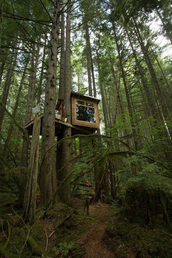 Epingle Par Bahman Sur Tree House Pinterest Cabanes Les Arbres