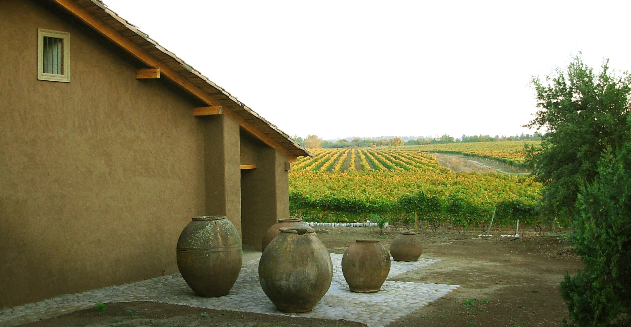 The Bustamante Vineyard in Chile