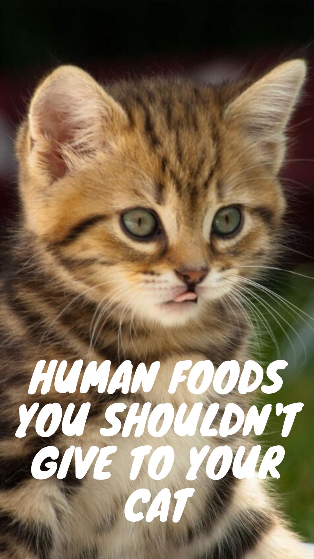 11 Human Foods Your Cat Shouldn T Eat Funny Cat Memes All Cat Breeds Cat Day