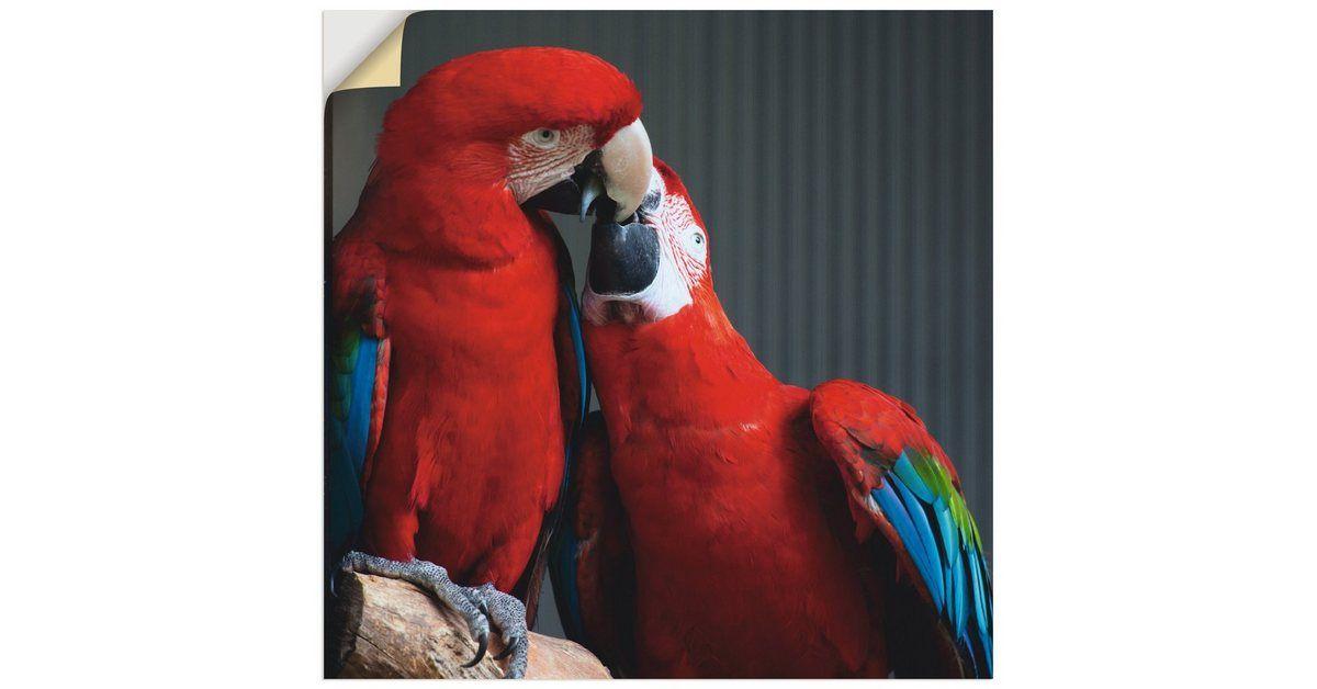 Photo of Artland Wandfolie, Premium Wandfolie »Elke Schmid-Neebe: Papageien« online kaufen | OTTO