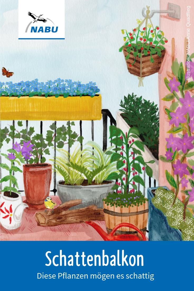 Für jeden Balkon die passenden Pflanzen   NABU   Clematis pflanzen ...