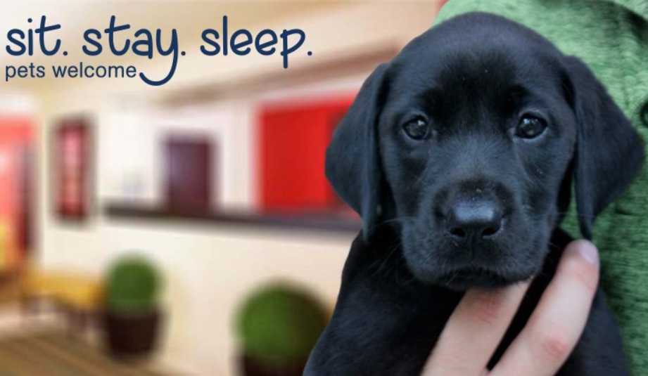 Where Can I Find A Pet Friendly Hotel Near Me Pet Friendly Hotels Pet Travel Pet Friendly