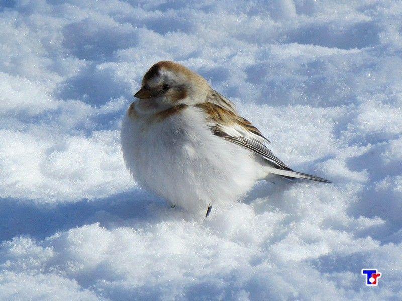 случай птицы кольского полуострова сказать, что некоторые