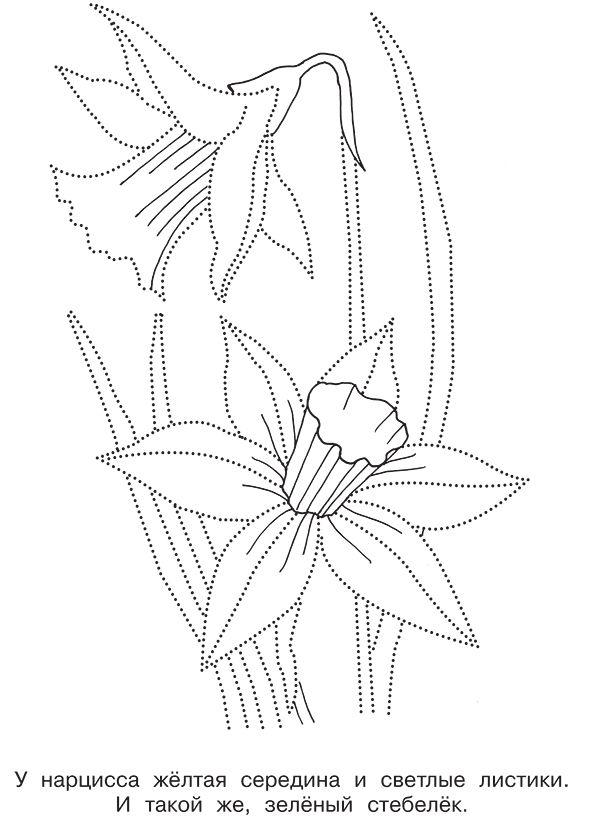 раскраска цветок нарцисса распечатать бесплатно | Узоры в ...